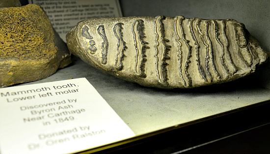 joplin-museum-mammoth